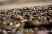 Airlie Beach-11