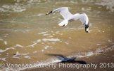 Airlie Beach-23