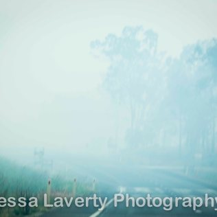 Smoke on the road from back burning on the Mt Larcom road