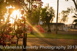 Sunrise through the bougainvillea