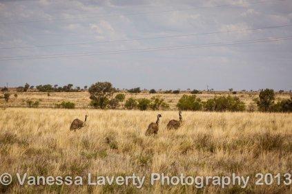 More emus