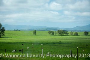 The green in the paddocks and the fat cattle are a vast difference to the brown and sunburnt country out west